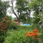 Gradina plina de flori la pensiunea Shanti